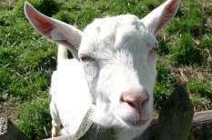 agrártámogatás, állattenyésztés, mezőgazdaság