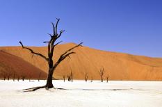 éghajlatváltozás, emberiség, erdő, fajpusztulás, háború, hőség, jövő, kánikula, kihalás, klímaváltozás, london, mezőgazdaság, miami, new york, nyár, tengerszintemelkedés, veszélyeztetett faj