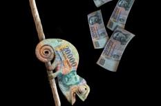 beruházázási hajlandóság, kavosz, kkv hitelezés, krisán lászló, széchenyi kártya, támogatott hitel