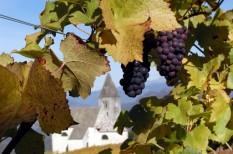 agrártámogatás, borászat, mezőgazdaság