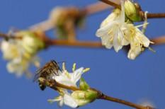 élelmiszerellátás, meh, méhek, méhészet, mezőgazdaság, növénytermesztés