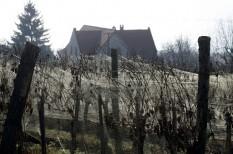 borászat, fűtési szezon, időjárás, klímaváltozás, mezőgazdaság, turizmus