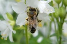 agrárium, fenntartható mezőgazdaság, környezetvédelem, méhek, méhészet, mezőgazdaság, növényvédő szerek