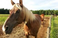 állattenyésztés, gyógyturizmus, turizmus