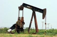 erdő, fosszilis energiahordozók, jog, olaj, per, usa