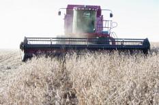 agrár, éhezés, élelmiszer, jövő, mezőgazdaság