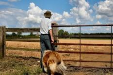családi gazdaság, fiatal gazdák, mezőgazdaság