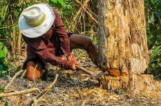 erdő, erdőirtás, google