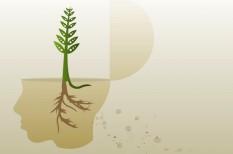 akcelerátor, felelős vállalat, fenntartható fejlődés, kkv pályázat, startup pályázat