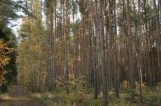 fenntartható gazdaság, környezeti terhelés, környezetvédelem