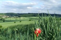 fenntartható település, közösségi termelés, vidékfejlesztés