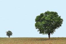 aszály, éghajlatváltozás, erdő, fa, fotoszintézis, hőség, jövő, kánikula, klímapolitika, klímaváltozás, tudomány