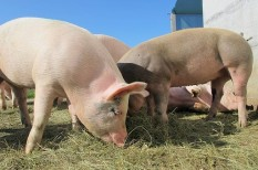 élelmiszeripar, húsipar, mezőgazdaság