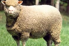állattartás, állattenyésztés, veszélyeztetett faj