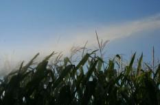 agrár, megtakarítás, öntözés, pénzspórolás, usa, víz
