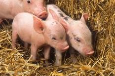 agrártámogatás, állattenyésztés, tejtermelők, versenyképesség javítás