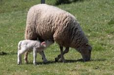 agrárfinanszírozás, agrártámogatás, állattenyésztés