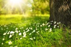 erdőgazdálkodás, uniós források, vidékfejlesztés