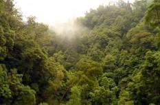 erdőirtás, fenntartható termelés, klímaváltozás, környezetvédelem, pálmaolaj, természeti erőforrás