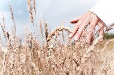 agrár, ázsia, gabona, kultúra, mezőgazdaság, pszichológia, rizs