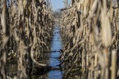 agrár, aszály, belvíz, k+f, mezőgazdaság, miskolci egyetem, vízgazdálkodás, vízművek