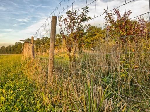Nő a gaz... Nem a kerítés állítja meg, hanem a Monsanto. De milyen áron? (fotó: freeimages.com)