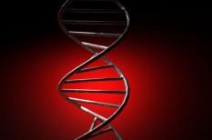 egészség, élelmiszeripar, genetika, gyógyszer, k+f, tudomány