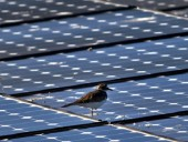 e.on, napenergia