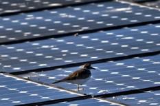 megújul energia, napelemek, napenergia