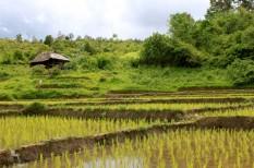 agrár, co2, emisszió, erdőirtás, metán