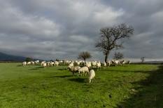 környezetvédelem, mezőgazdaság, termőföld