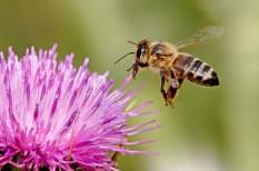 biodiverzitás, élelmiszerbiztonság, méhek, méhészet, tudomány, vegyszer