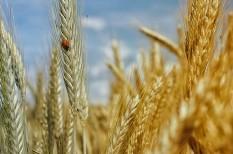 cégfelvásárlás, felvásárlások, fúzió, génmódosítás, génmódosított, mezőgazdaság, vetőmag-gyártás