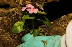 fenntarthatóság, kertészet, mezőgazdaság