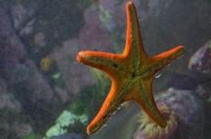 állat, bioszféra, élővilág, fajpusztulás, jövő, óceán, tenger, tudomány