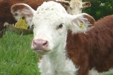 mezőgazdaság, tejkvóta, uniós szabályozás