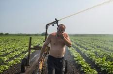 mezőgazdaság, növénytermesztés, öntözés, piacesprofit.hu, szárazság, vízkészlet