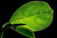 megújuló energia, tiszta energia