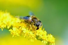 környezetvédelem, méhek, méhpusztulás