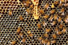 méhek, méhészet, méz, őstermelő