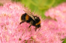 agrár, élelmiszer, környezetterhelés, méhek, méhészet, méhpusztulás, mezőgazdaság