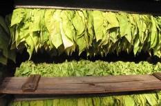 dohányzás, ivóvíz, mezőgazdaság, ökológiai lábnyom, pazarlás, termőföld
