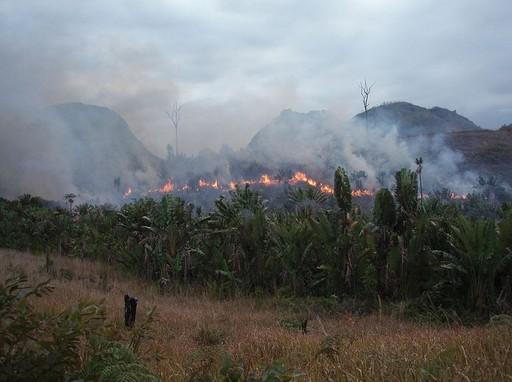 Madagaszkáron is él a probléma Kép:Wikipedia