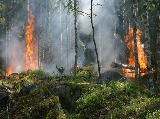 erdőtűz