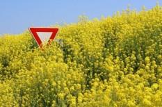 gmo, mezőgazdaság, uniós szabályozás
