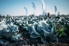 fogyasztói szokások, mezőgazdaság, munkaerőhiány