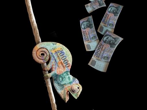 kaméleon, pénz, természeti erőforrás