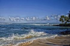 biodiverzitás, klímaváltozás, környezetvédelem, tengeri élővilág