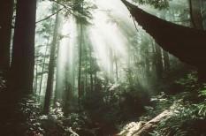 biodiverzitás, erdő, erdőirtás, ökológiai katasztrófa