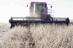 élelmiszerárak, mezőgazdaság, szélsőséges időjárás